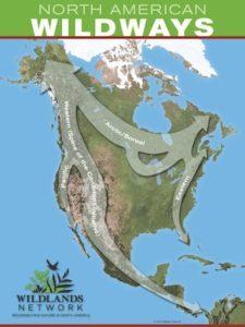 http://www.wildlandsnetwork.org/wildways/eastern-wildway