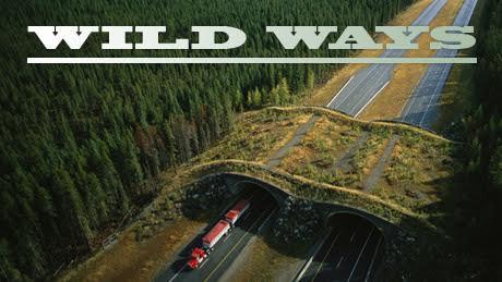Wild Ways: Building Natural Highways for Animals
