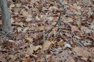 oakland-hidden-object