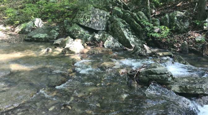 Wild Virginia Provides Access to Public Comments Submitted to Water Control Board
