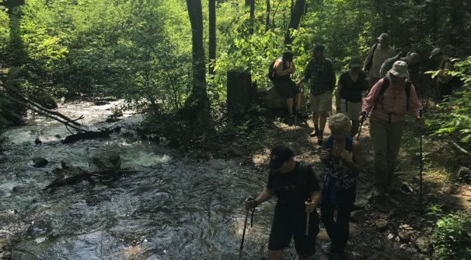 The Importance of Brook Trout Conservation