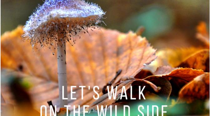 Wild Side Spring Fundraiser!