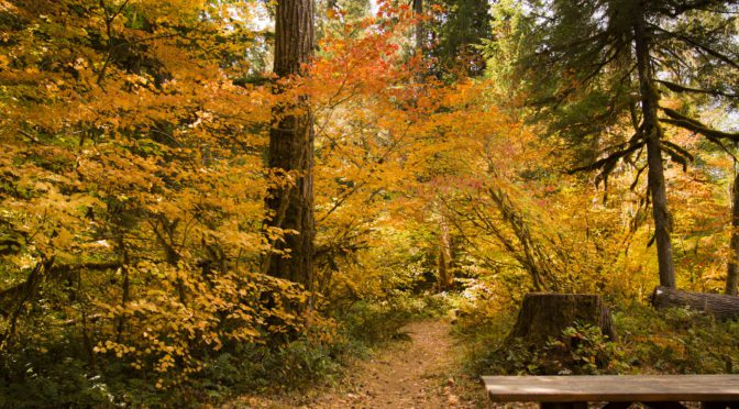 Oregon Wild's New Report Shows Importance of Forest Conservation